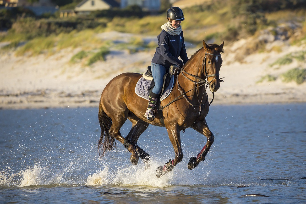 person riding horse in posting trot