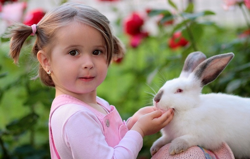 pink eyes rabbit-pixabay