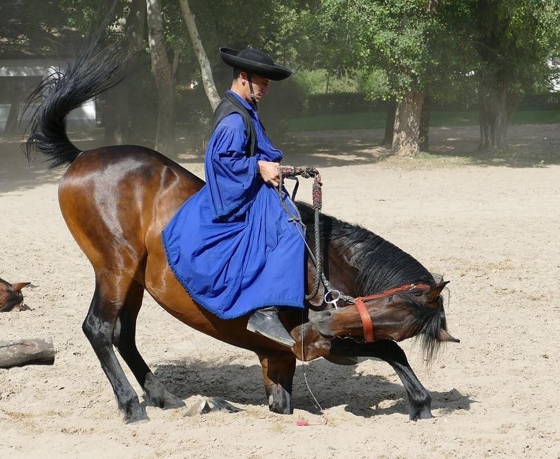 puszta-horse-pixabay