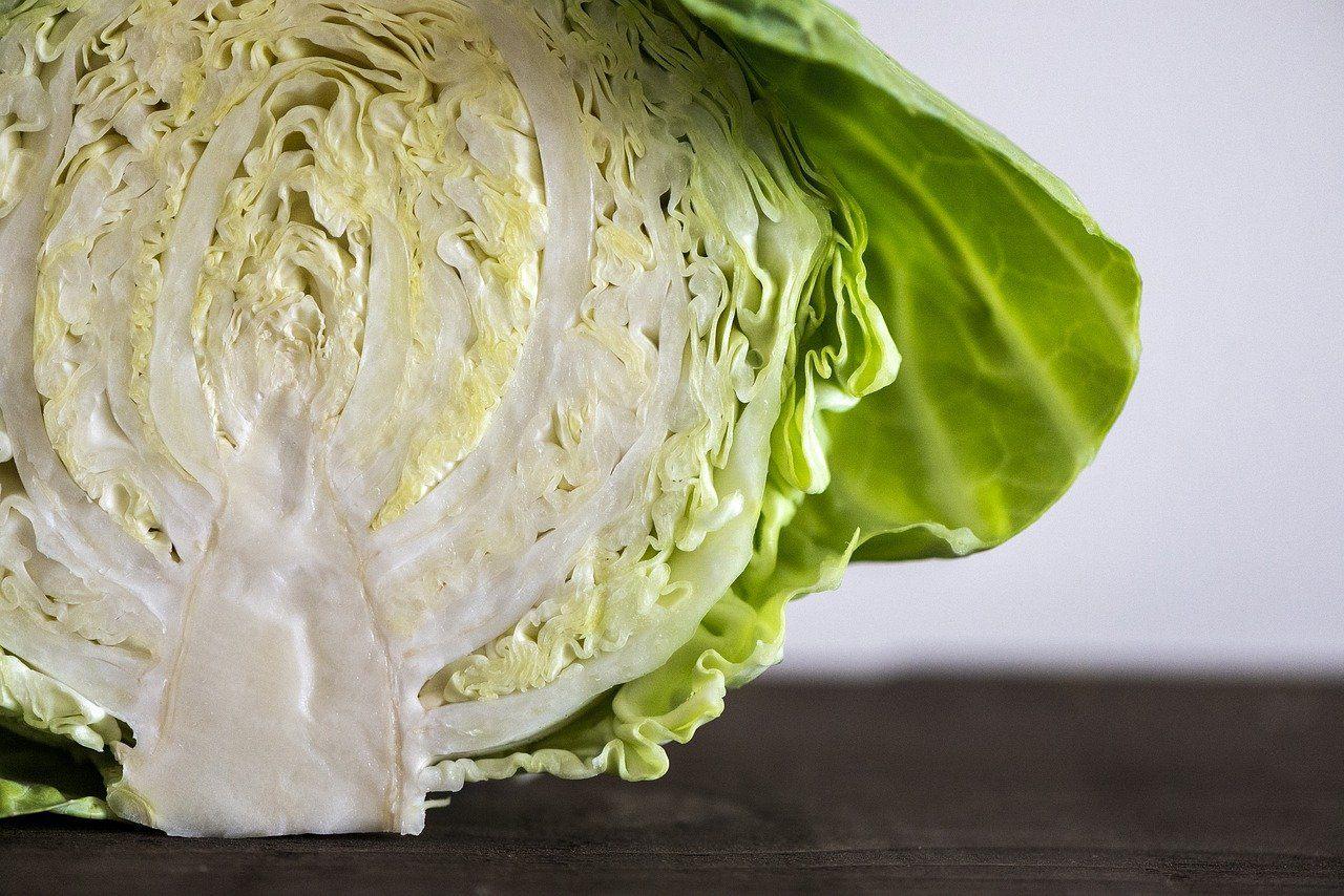 sliced cabbage