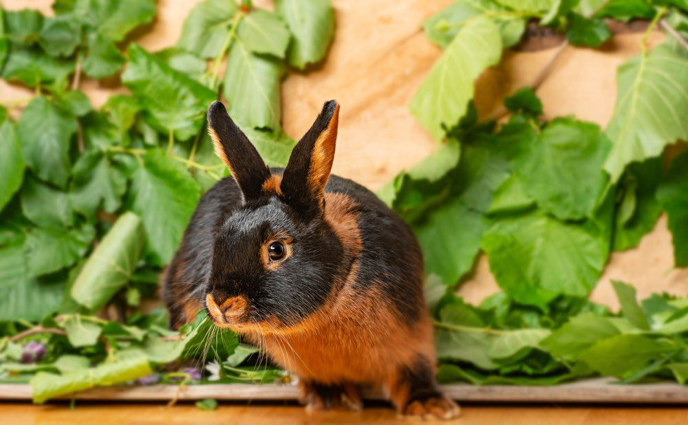 tan rabbit with grass on wooden background