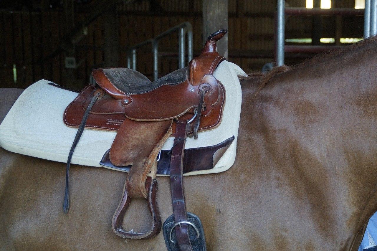 western saddle on horse