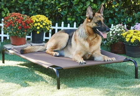1Frisco Steel-Framed Elevated Dog Bed