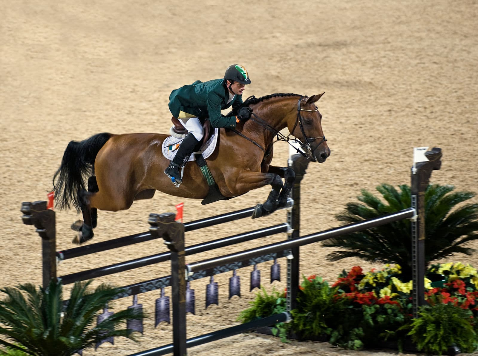 Hanoverian jumps