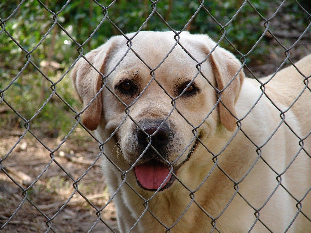 Happy dog at a fence