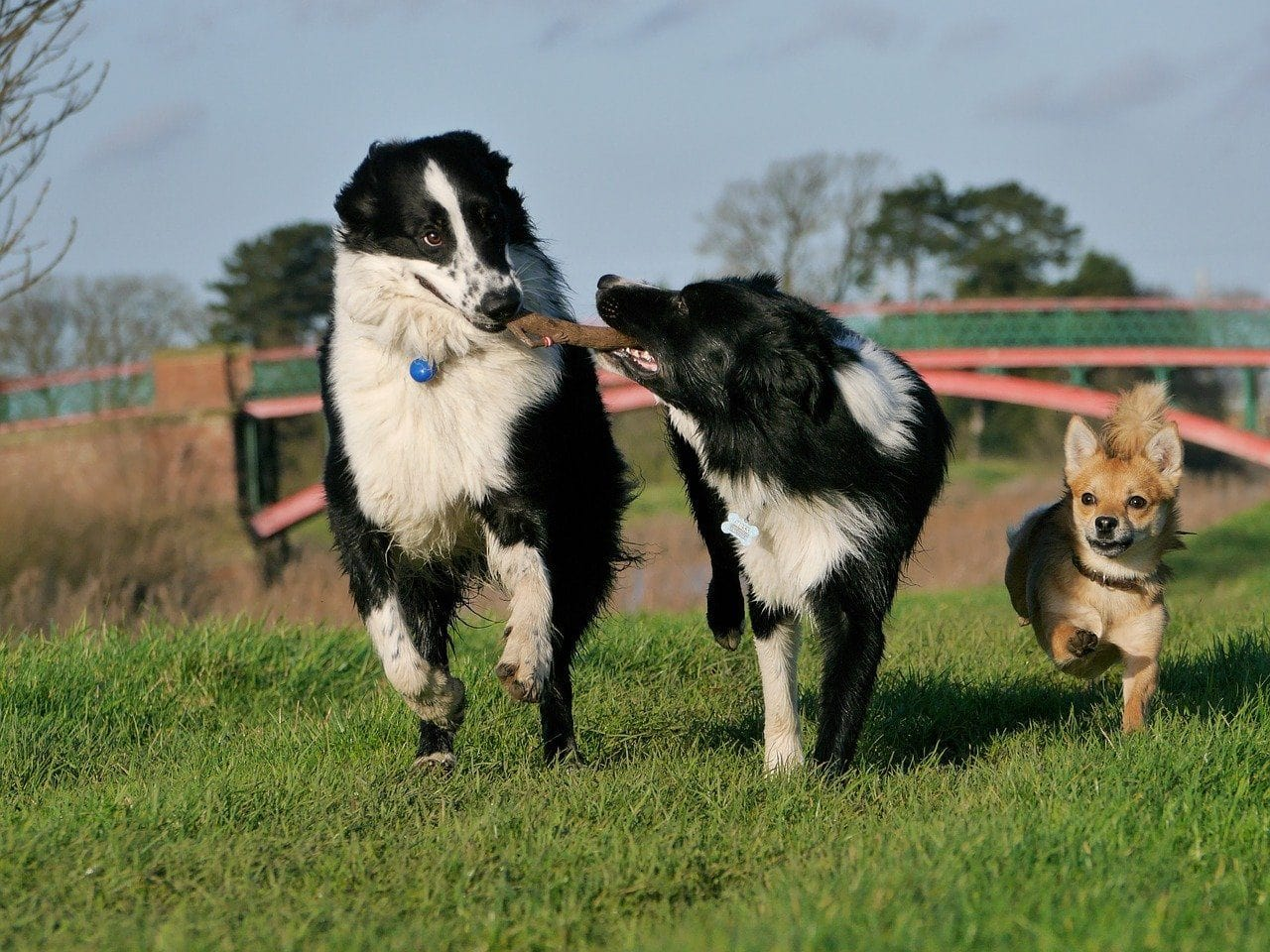 Happy dogs playing together