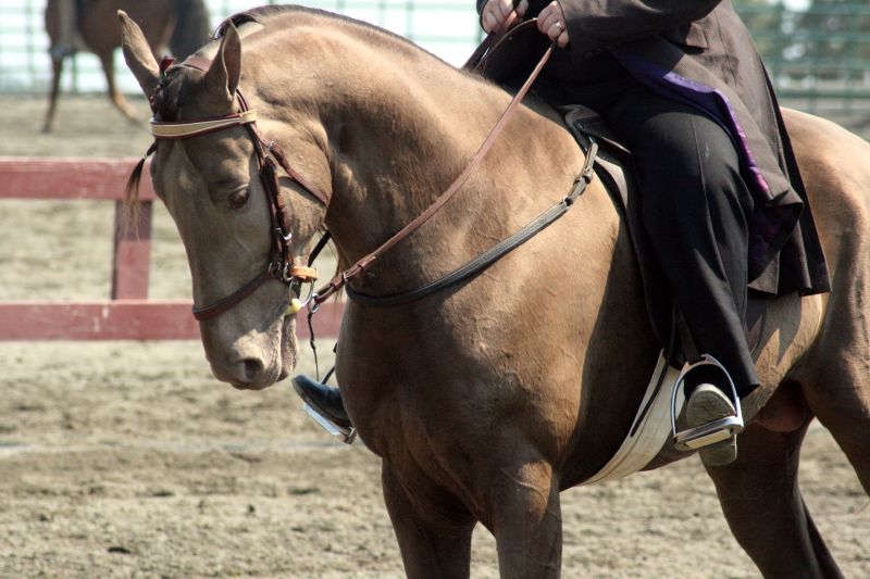 Tennessee Walking_Horse