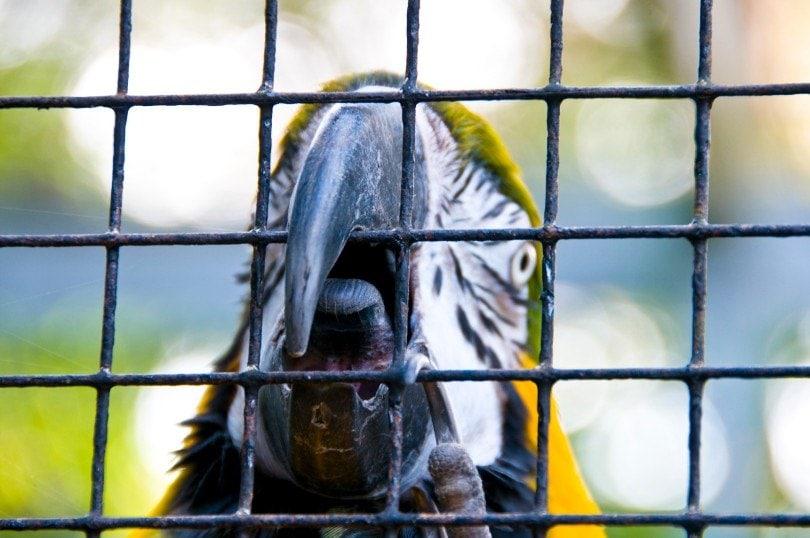 a close up on macaw's beak