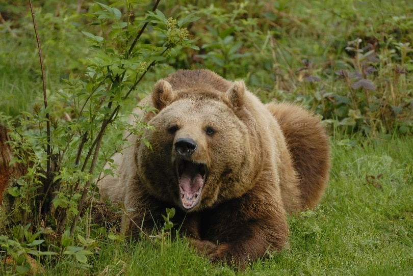 bear featured,Karin Jaehne, Shutterstock