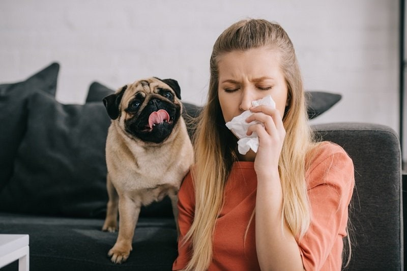 blonde girl allergic to dog sneezing in tissue near adorable pug