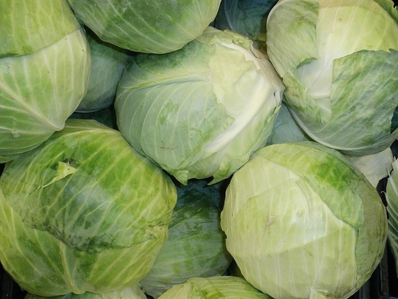 cabbage_Embedded Data Bot_Wikimedia