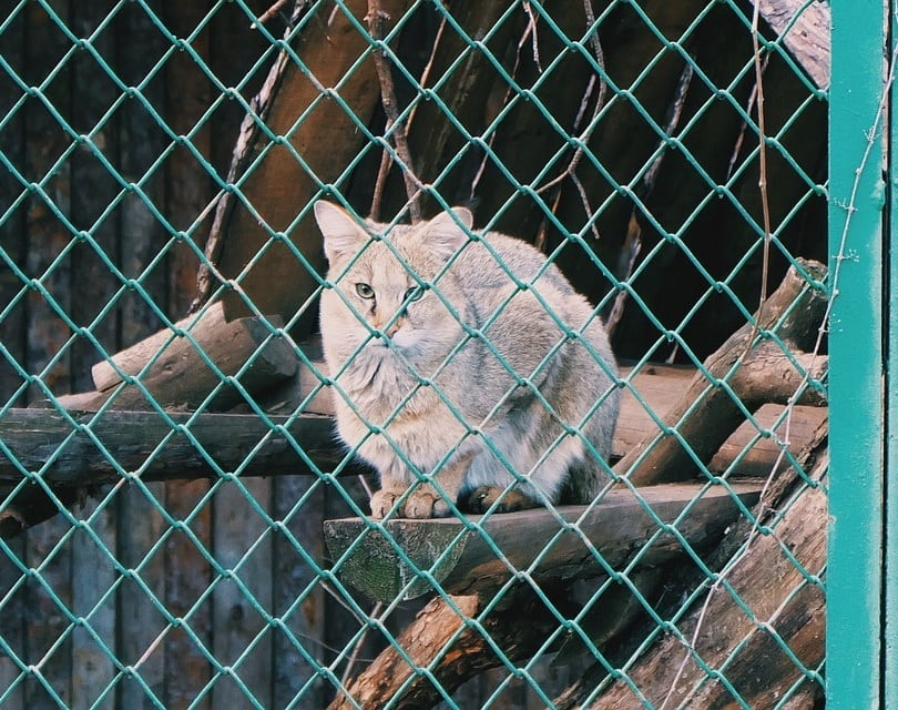 cat cage donterase, Pixabay