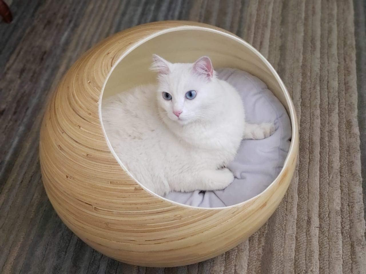 cat inside Fhasso Luxury Bamboo Pod Cat Bed
