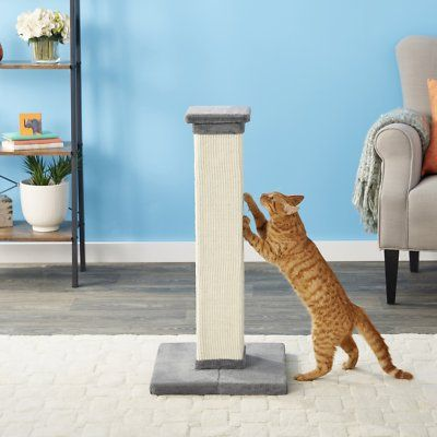 cat scratching on Frisco 33.5-in Sisal Cat Scratching Post