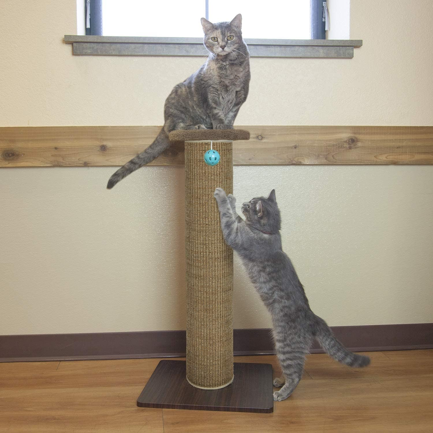 cats in Kitty City Premium Scratching Post