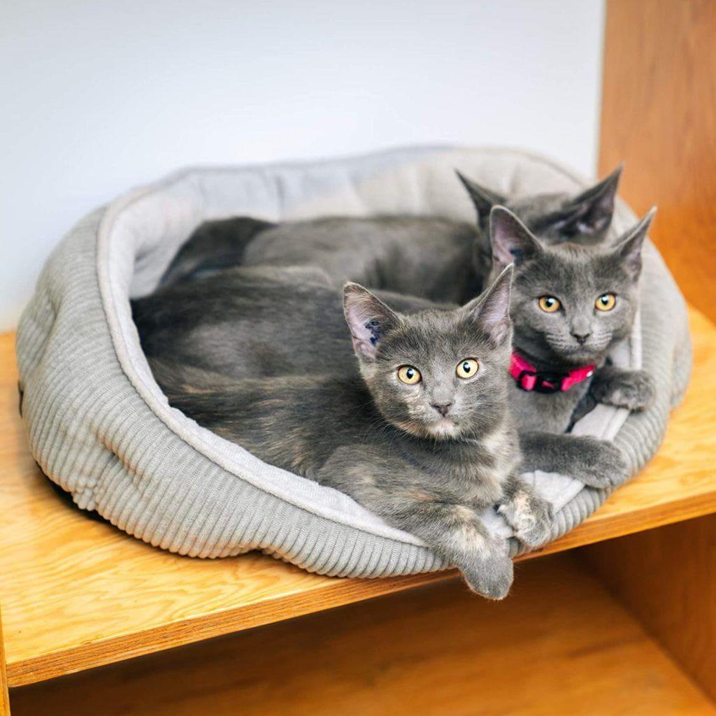 पालतू शिल्प में बिल्लियाँ साधारण स्लीपर सेल्फ वार्मिंग बिल्ली बिस्तर