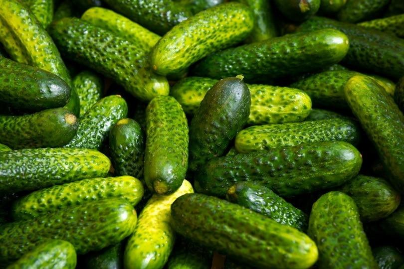 cucumber_Lukáš Jančička_Pixabay