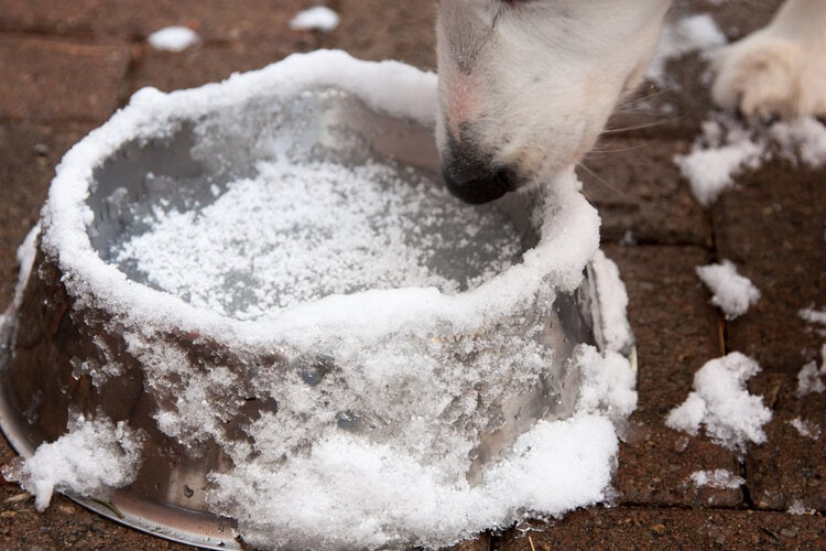 dog water bowl frozen in winter