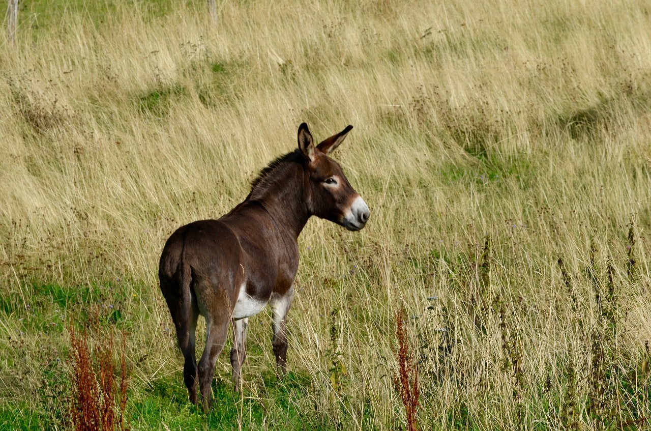 donkey in the pasture