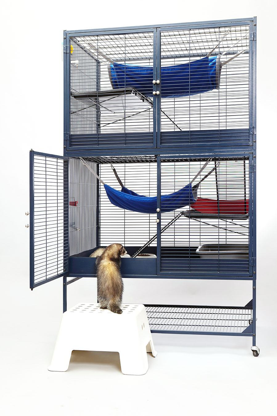 ferret entering its cage