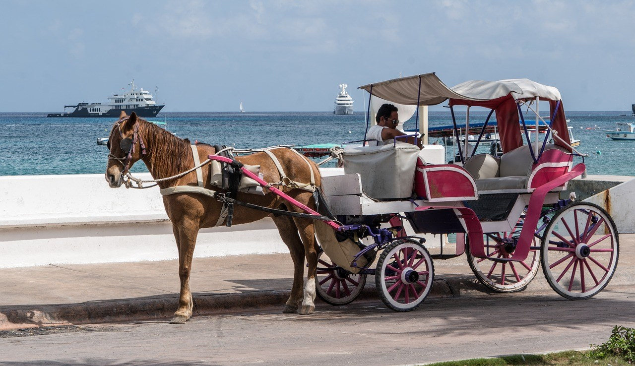 horse and a carriage seaside