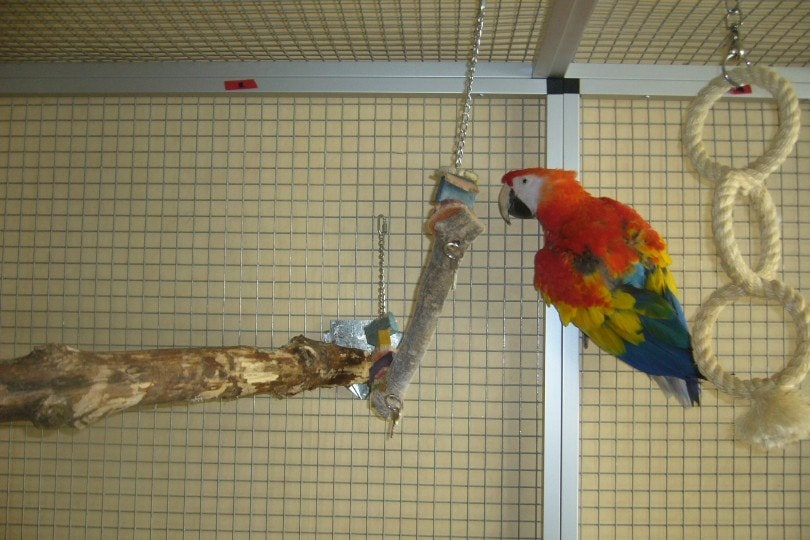 macaw in its cage