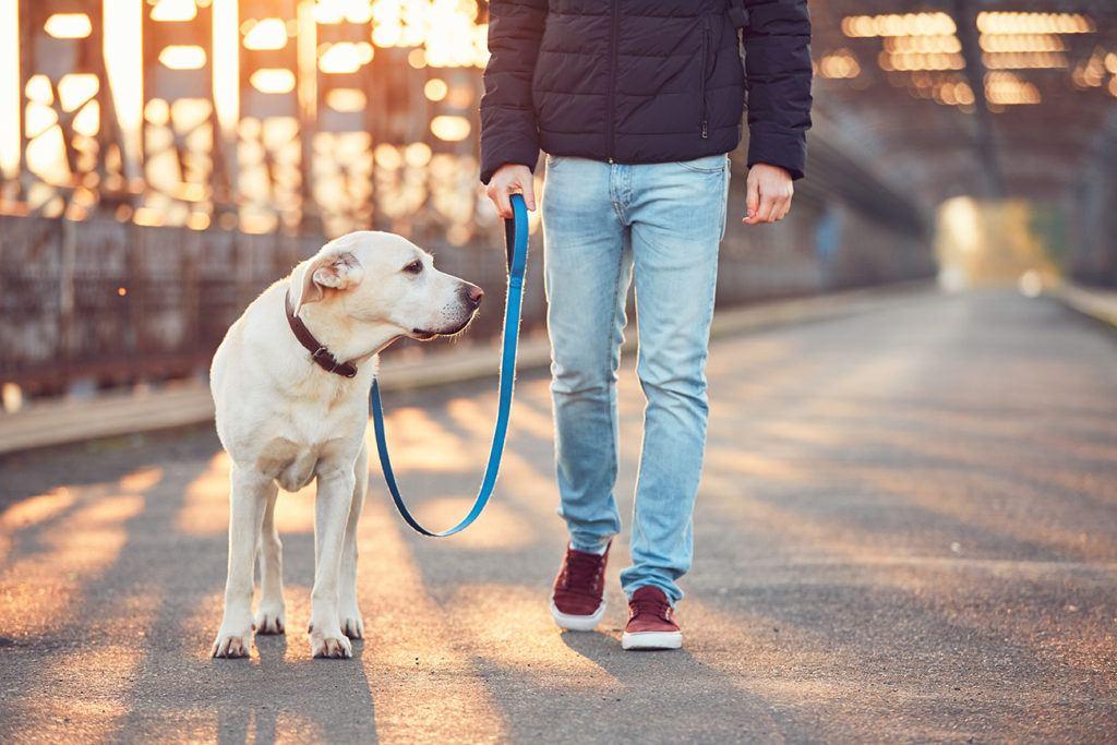 man walking dog_Jaromir Chalabala, Shutterstock
