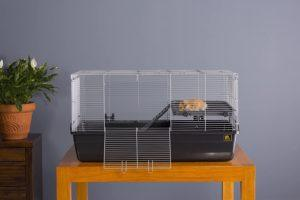 mouse inside Prevue Pet Products 528 Small Animal Cage
