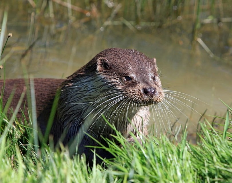 otter featured,Piqsels