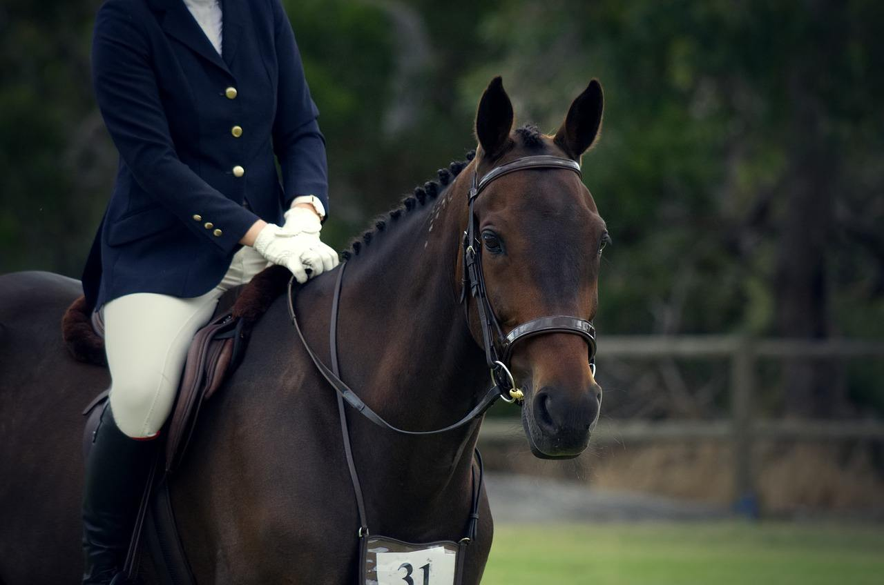 person riding American Standardbred Horse