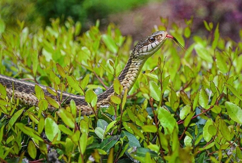 snake outdoor