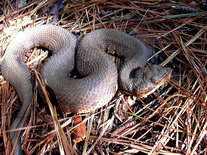 snake_Edward J. Wozniak_Pixnio.com