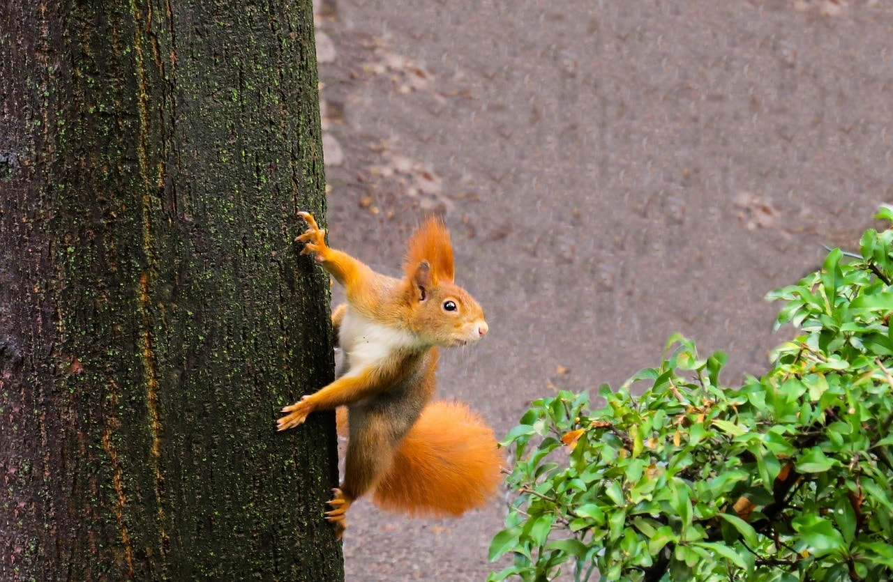 squirrel climbing on the tree