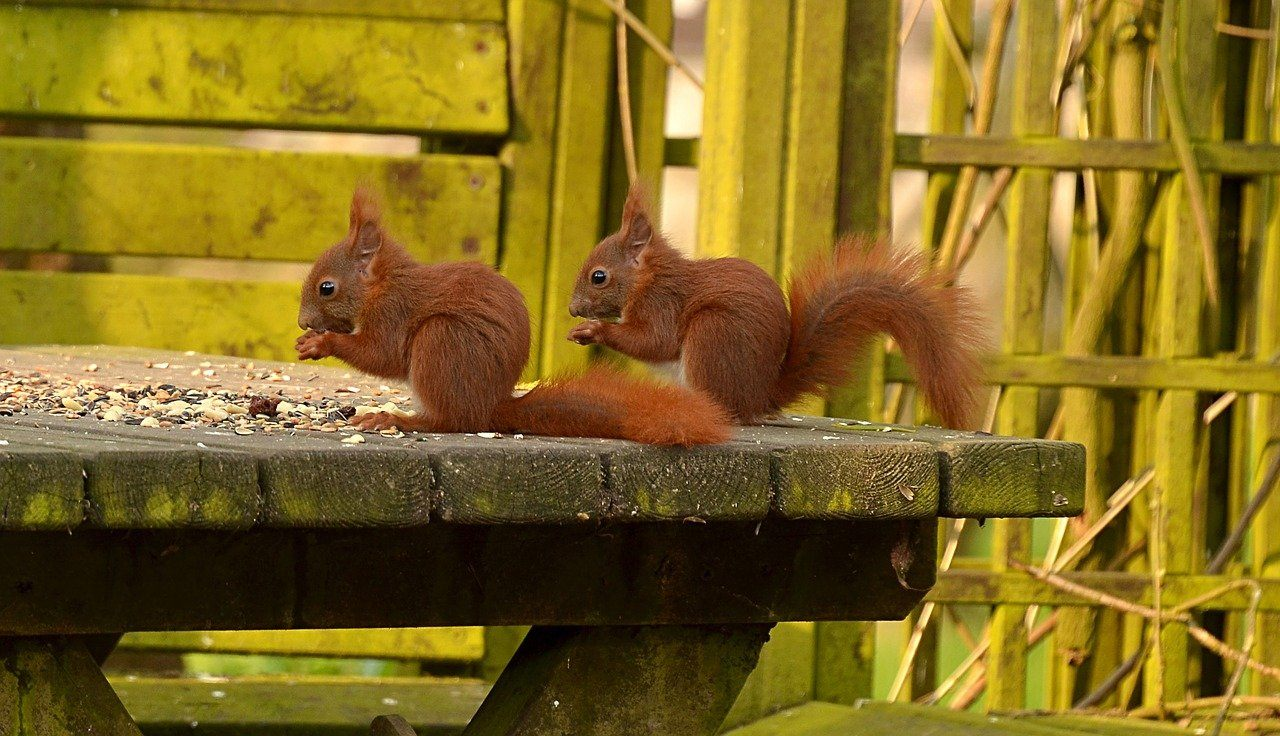 squirrels eating