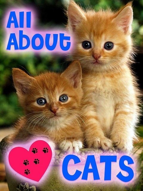 All About Cats - B07PM8CFBJ