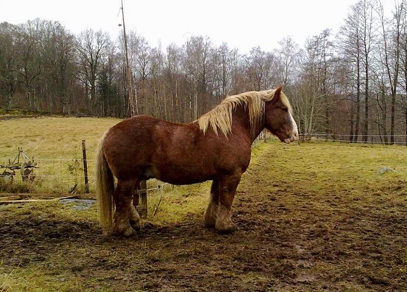 Ardennais horse