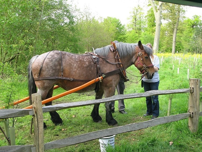 Ardennes_horse