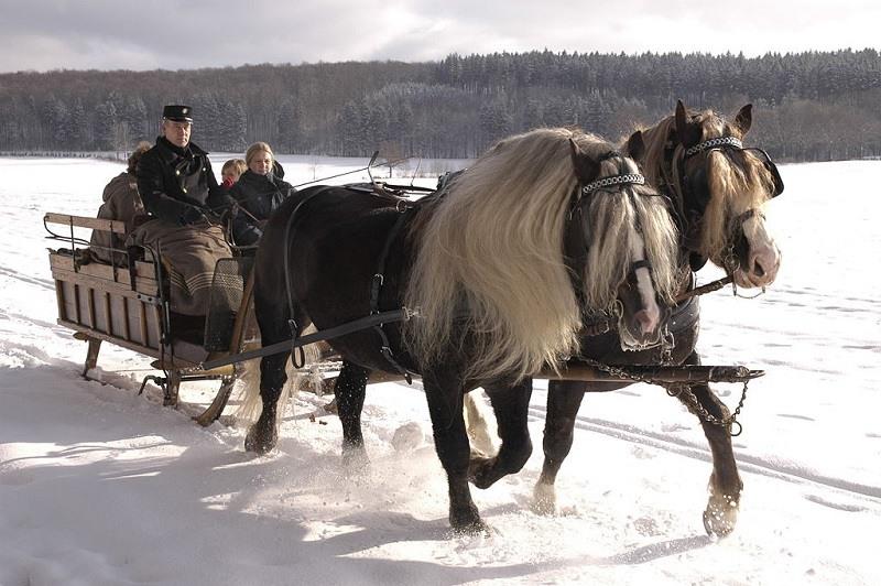 Black Forest Horses