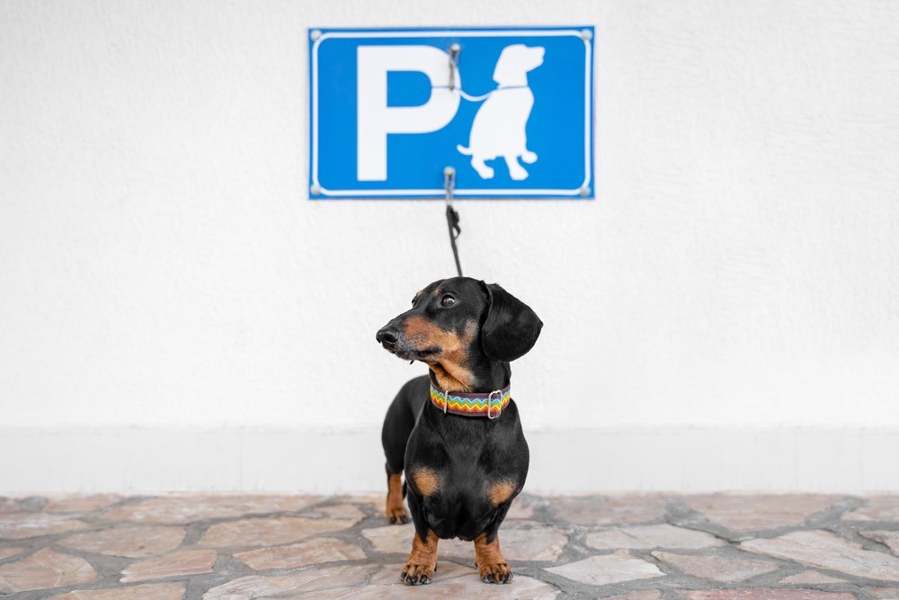 Dachshund outside store pet parking