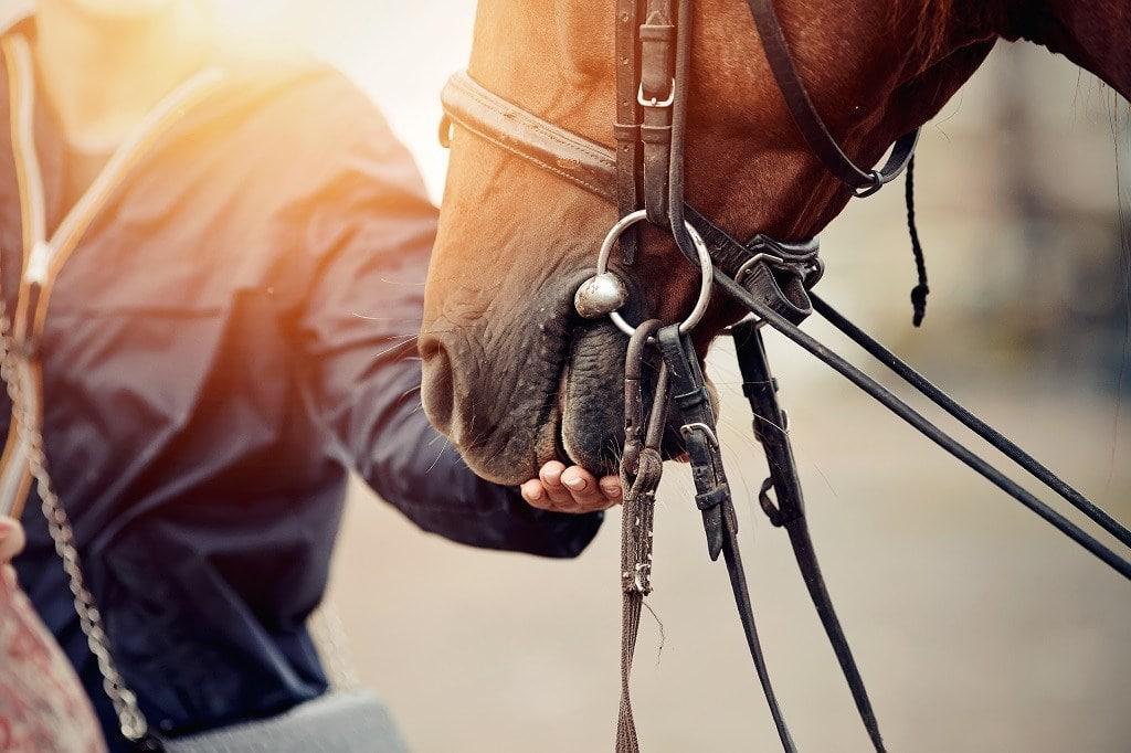 Elya-Vatel_shutterstock_horse-feeding