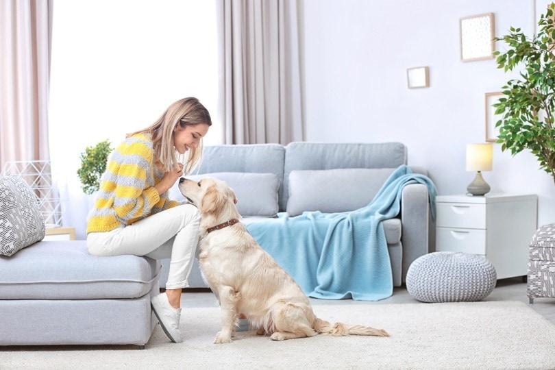 Pet sitting II_Africa Studio_Shutterstock