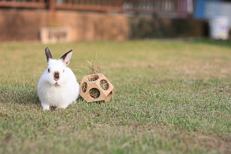 Small dwarf rabbit playing on the ground