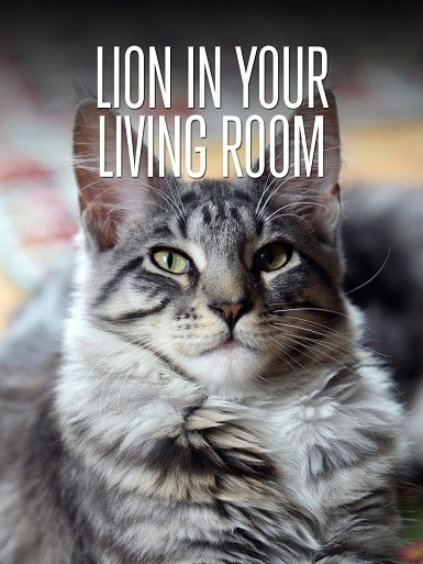 The Lion In Your Living Room - B073DLT6DS
