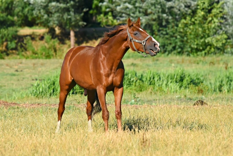 brown horse_Piqsels