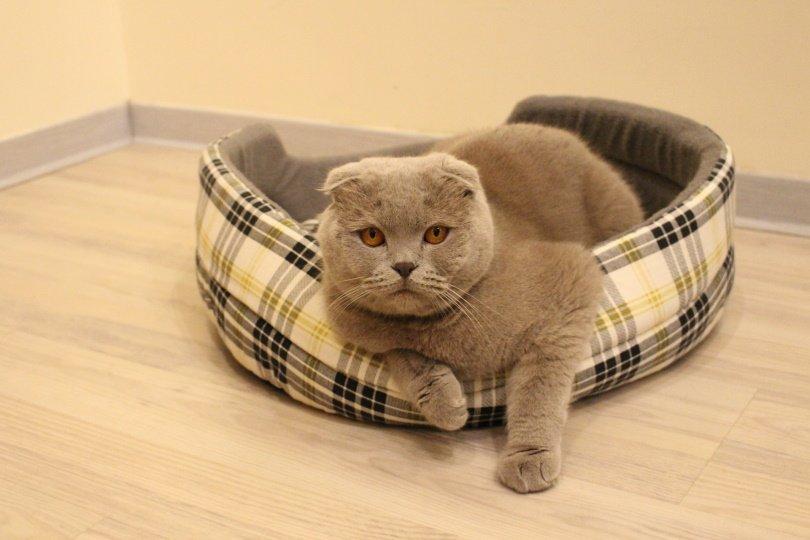 cat bed design_Victoria Yanchevskaya_Pixabay