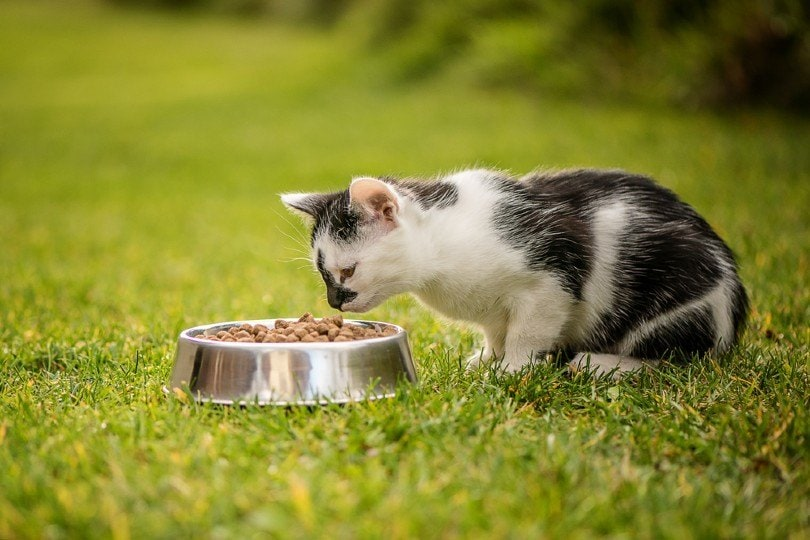 cat eating granulated cat food from a bowl_Lumi Studio_Shutterstock