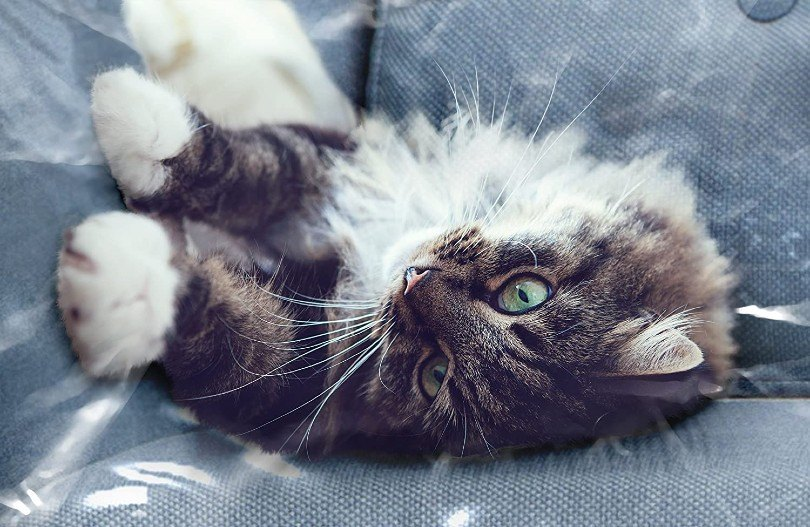 cat lying on the covered couch
