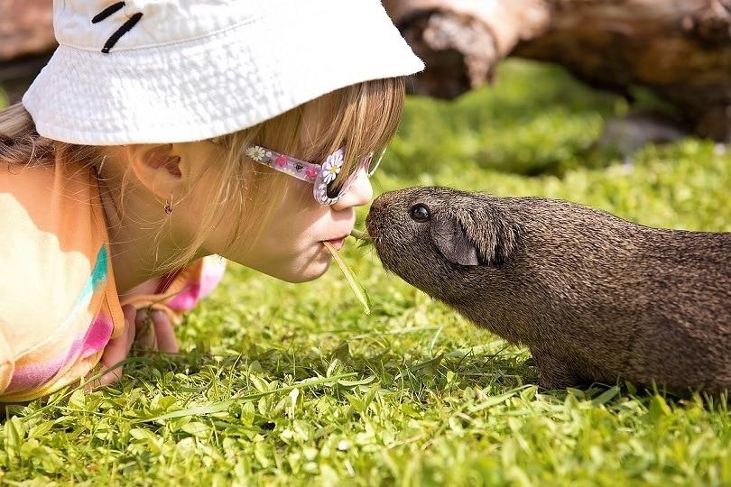 child-guinea pig-pixabay