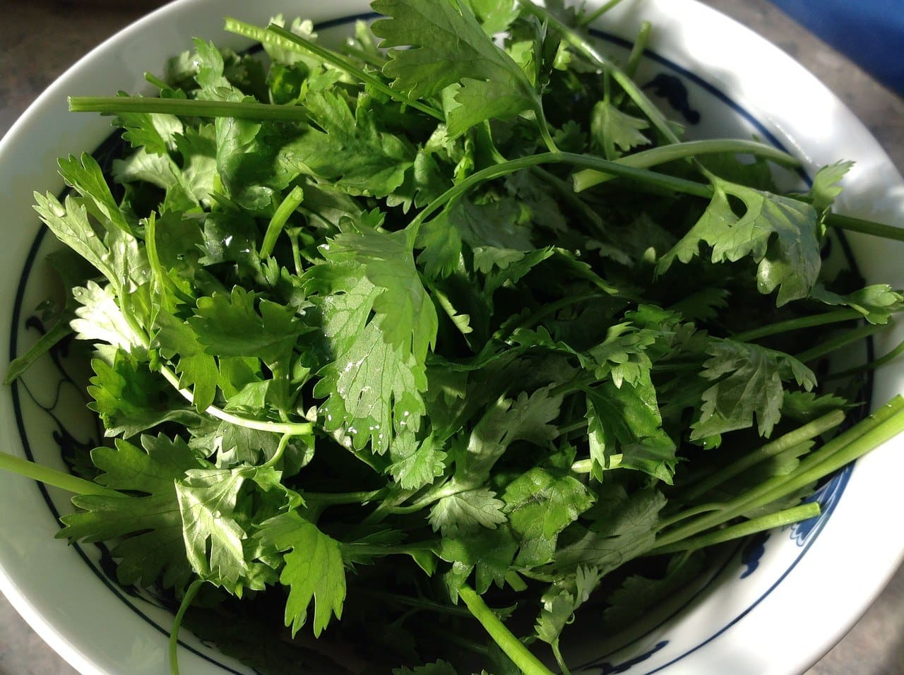 cilantro in a bowl