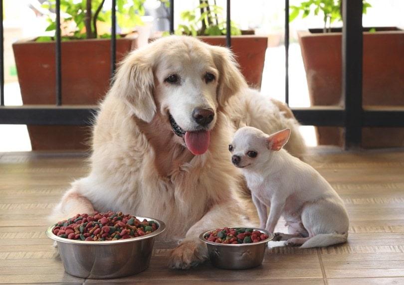 dogs eating_Phuttharak_Shutterstock